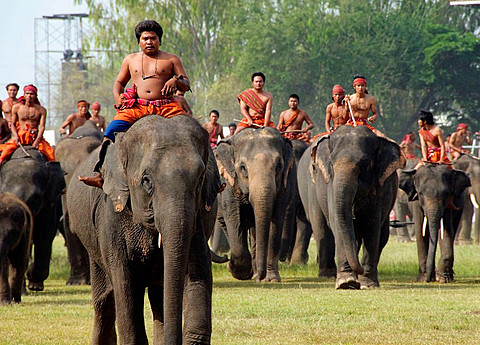 mahouts and their elephants at the Elephant Roundup in Surin Thailand