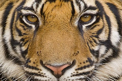 Animals close up and personal