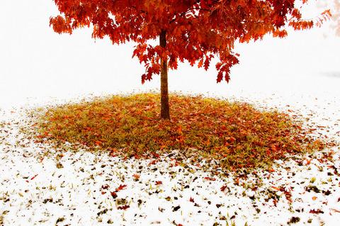 Late autumn tree