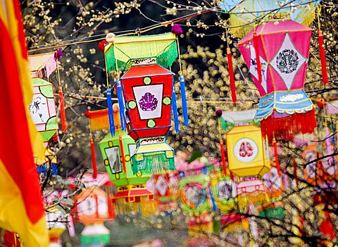 Multicolored handmade lanterns hang from trees in a park during the Chinese New Year Spring Festival, Chengdu, Sichuan, China, Asia