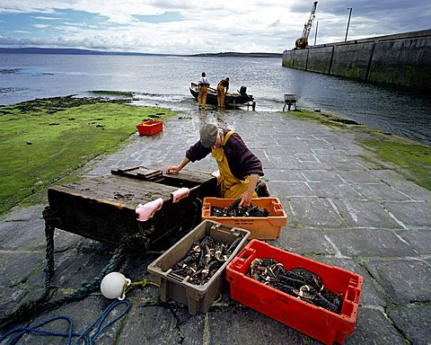 Lobster fishing in Ireland, Inishmaan, Aran Islands, County Galway, Ireland