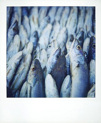 Polaroid image of fish on sale in fish market, Essaouira, Morocco, North Africa, Africa