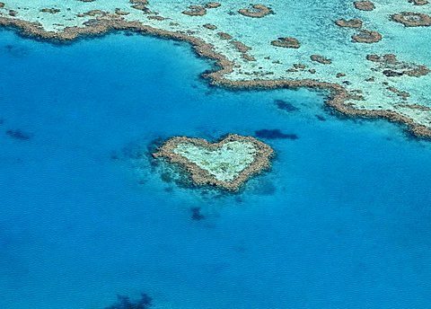 Heart-shapes in nature