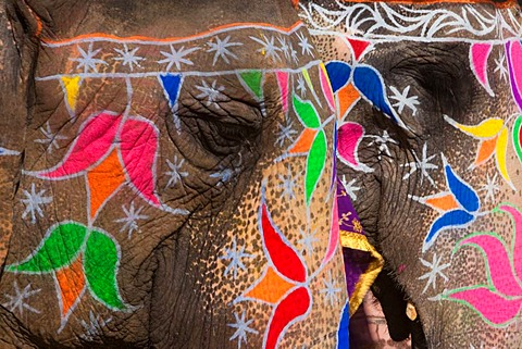 painted elephants at holi festival roberthardingcom news