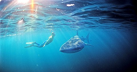 Sharks by Reinhard Dirscherl