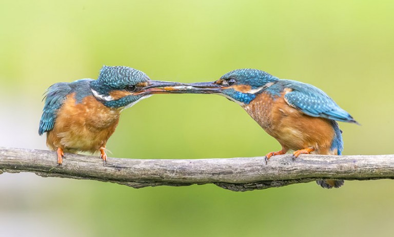 New signing – brilliant wildlife photographer David Gibbon