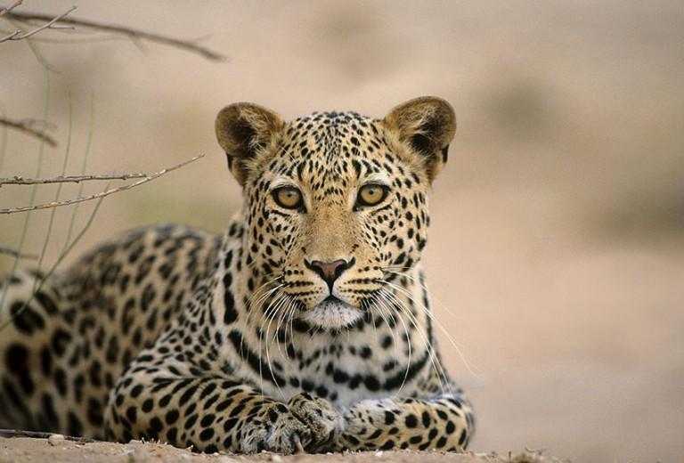 The rich wildlife of the Kalahari