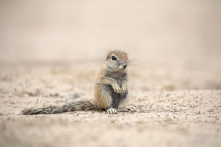 Adorable ground squirrels by Ann and Steve Toon