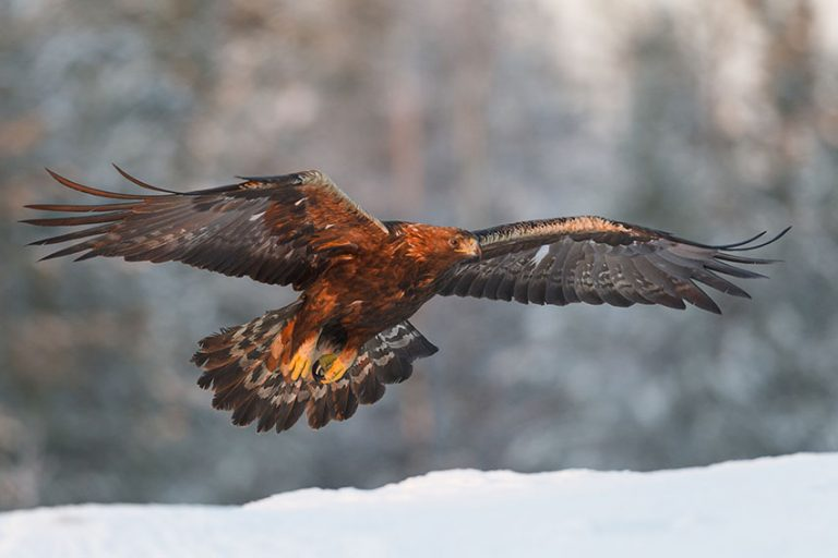 The majestic eagles of Taiga Forest by Garry Ridsdale