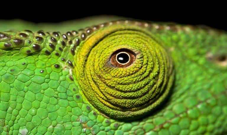 Magical chameleons