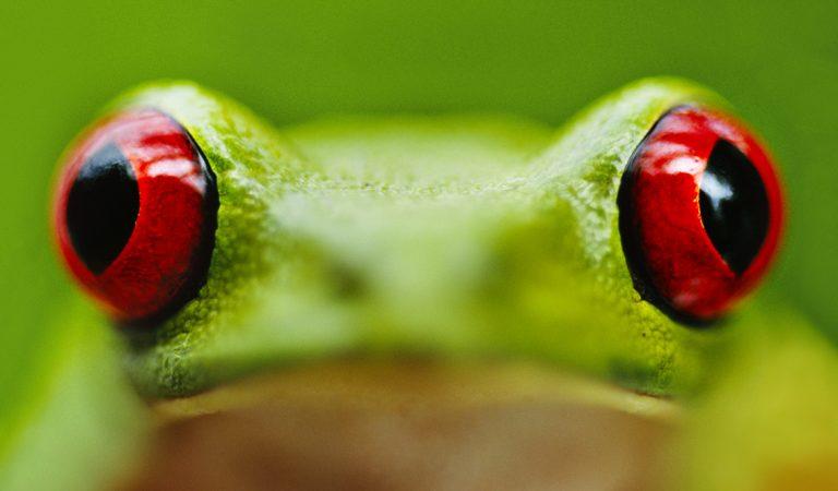 Amazing tree frogs