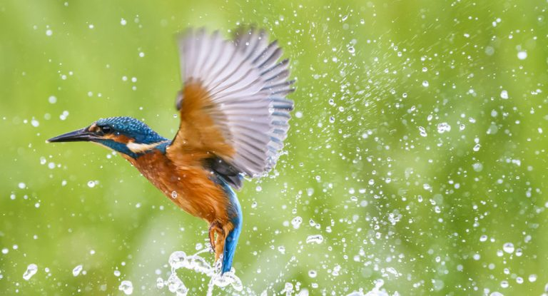 Stunning kingfishers by Gary Cook