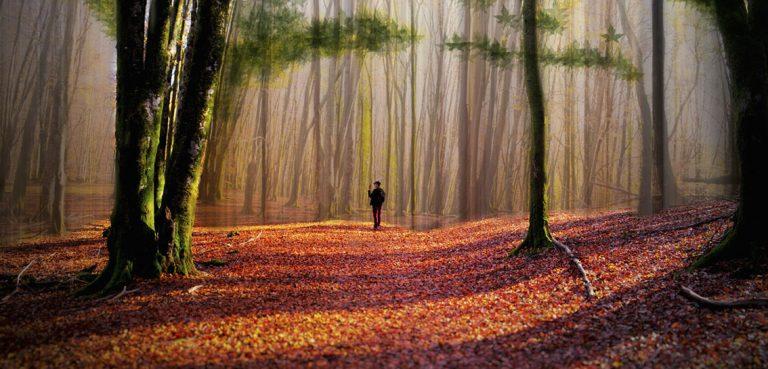 Season of mists and mellowfruitfulness