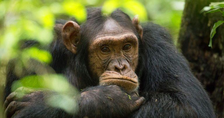 New signing – wonderful wildlife photographer Tom Broadhurst