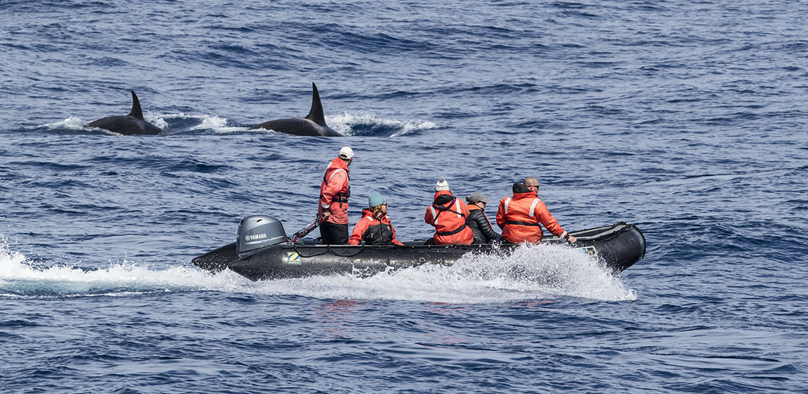A robertharding photographer's rare encounter with elusive 'Type D' killer whales