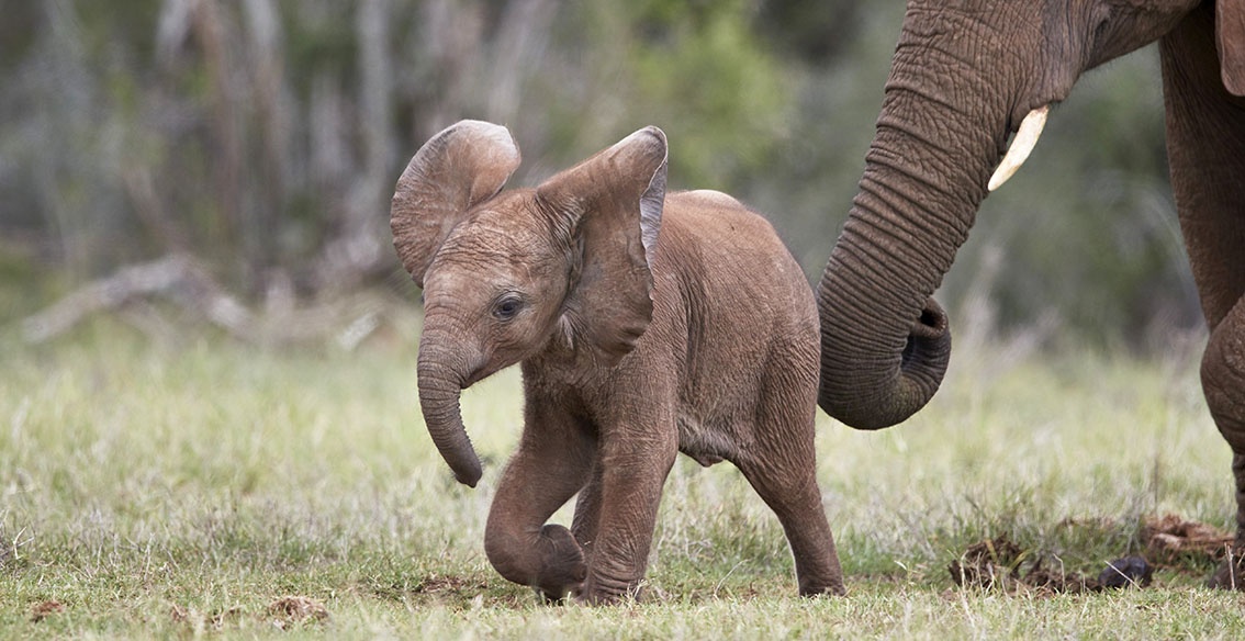 Enchanting baby elephants by James Hager