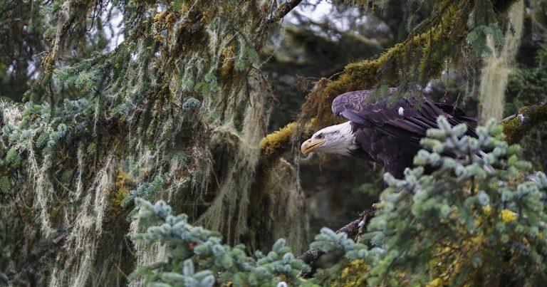 Alaska's bountiful wildlife by Ashley Morgan