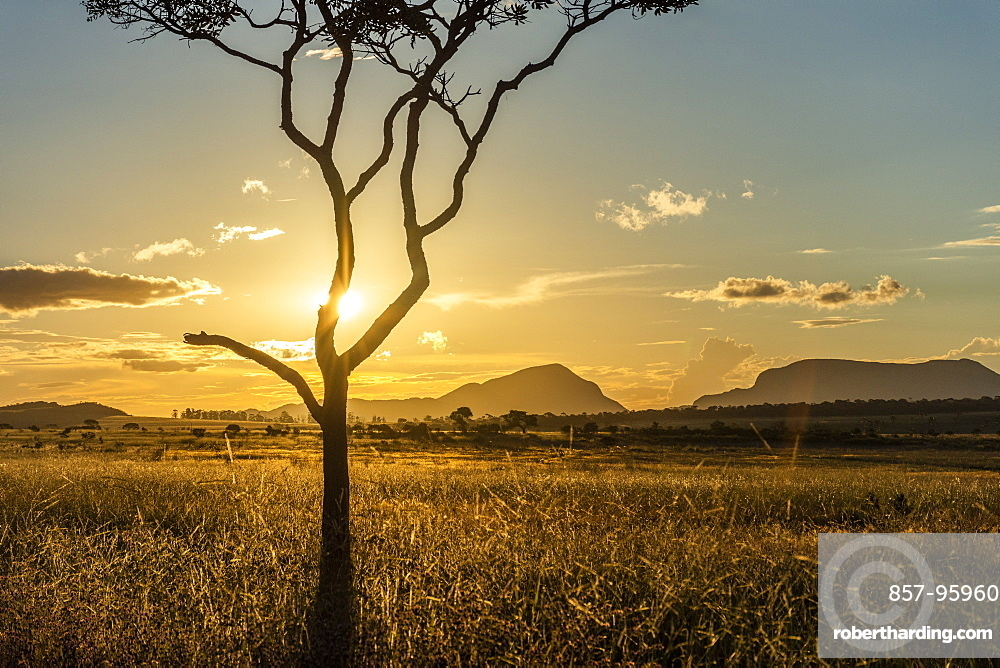 Sunset on beautiful cerrado vegetation landscape with tree silhouette, Chapada dos Veadeiros, Goias, Brazil