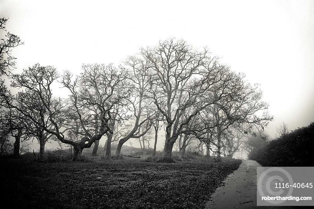 Bare Trees Along A Path