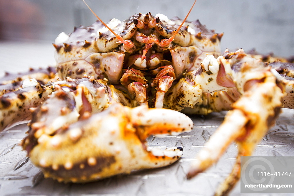 Red King Crab On The Deck Of A Commercial Fishing Boat, False Pass, Alaska, United States Of America