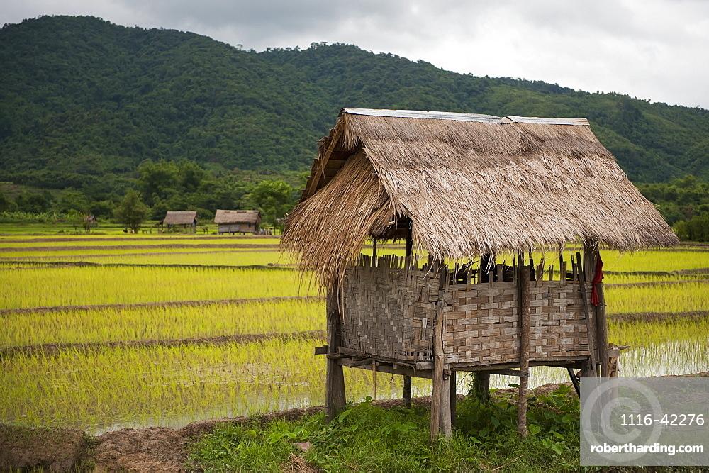 Rice Paddy Bamboo Hut, Luang Namtha, Laos