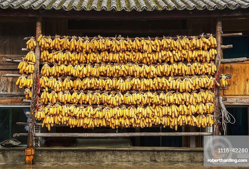 Corn Liquor Distillation Supplies, Tiger Leaping Gorge, Yunnan, China