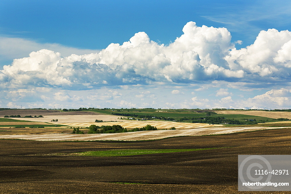 Rolling Hills With Fields Of Soil And Stubble Lines With Storm Clouds And Blue Sky, Alberta, Canada