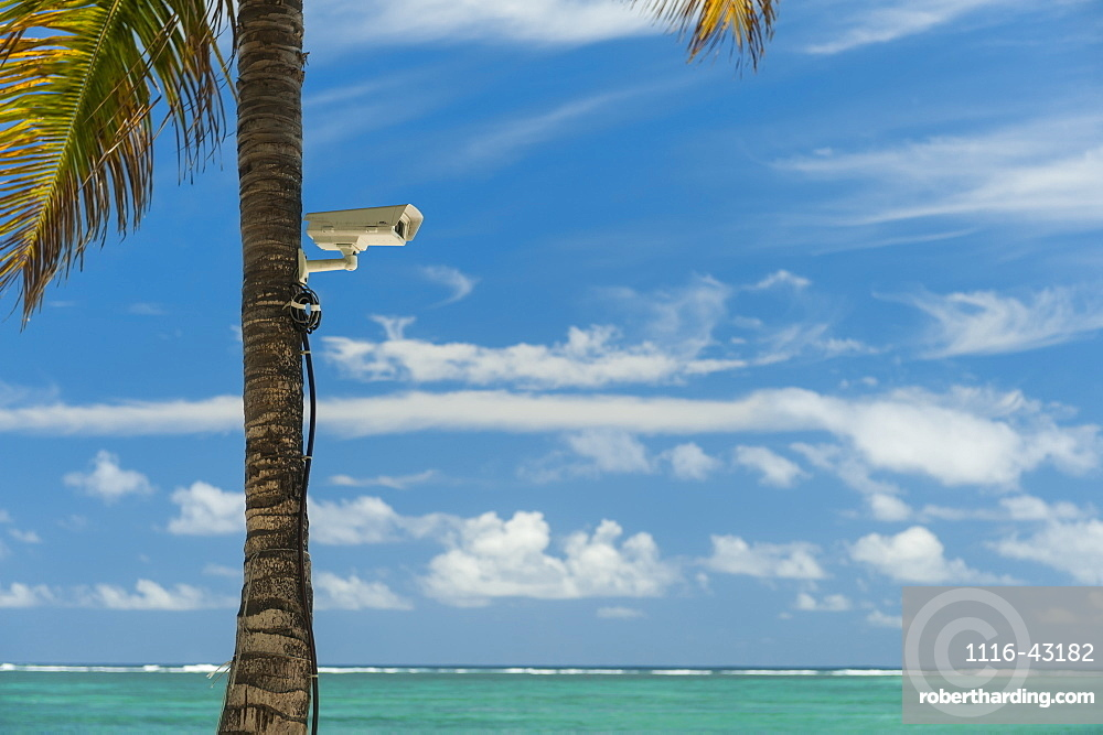 Palm Tree With Cctv Camera Attached To It On Beach, Republic Of Mauritius