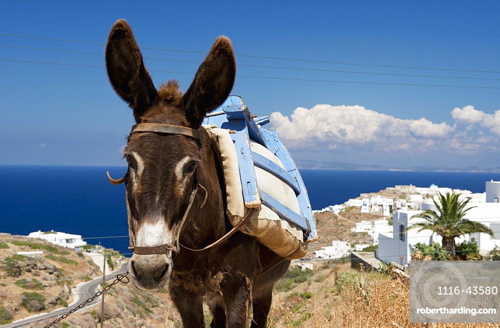 A Donkey In A Field, Sifnos, Cyclades, Greek Islands, Greece