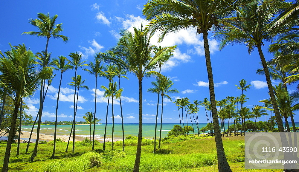 Wailau Bay, Kauai, Hawaii, United States Of America