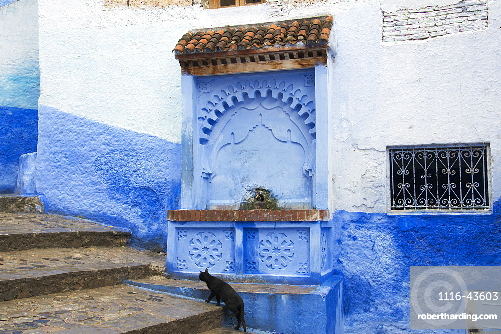 Black Cat Walking Up Stairs Past Water Fountain, Chefchaouen, Morocco