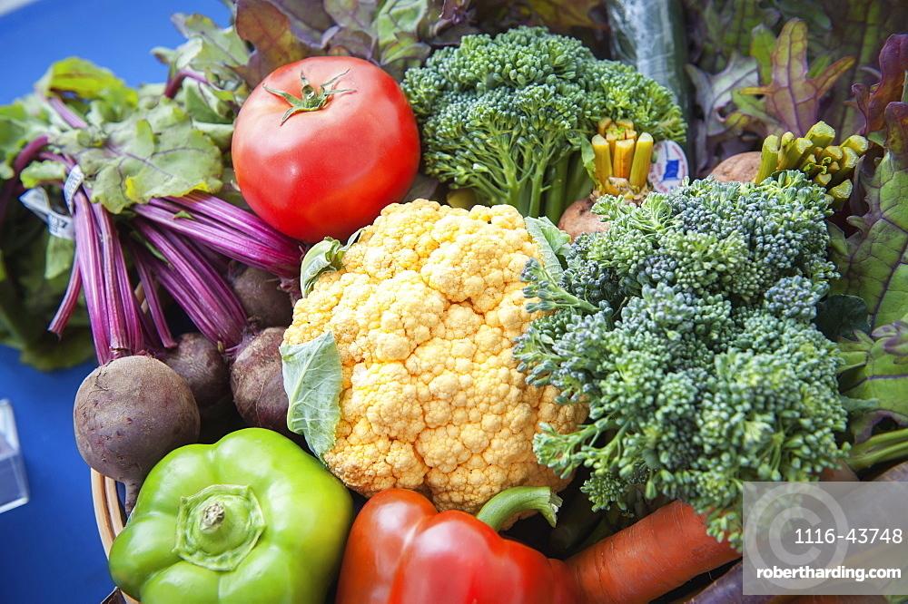 Basket Of Freshly Harvested Vegetables, Palmer, Alaska, United States Of America