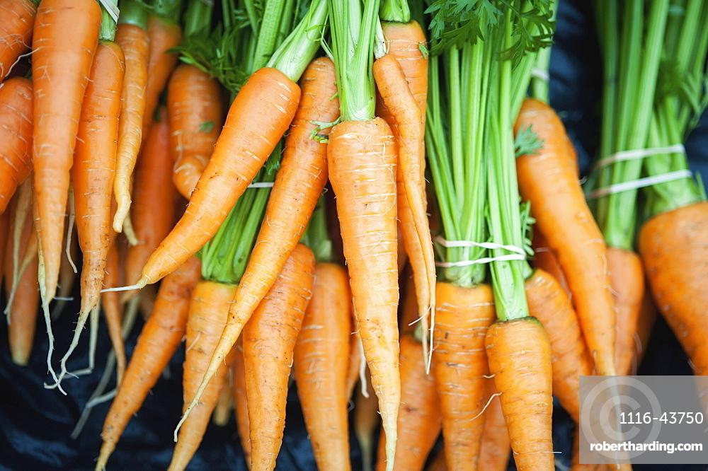 Bundles Of Freshly Picked Carrots, Palmer, Alaska, United States Of America