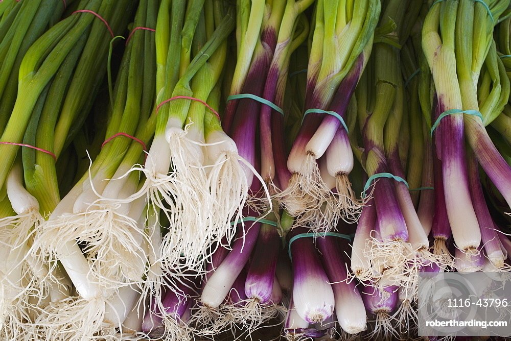 Leeks For Sale At A Roadside Stand, Dunham, Quebec, Canada