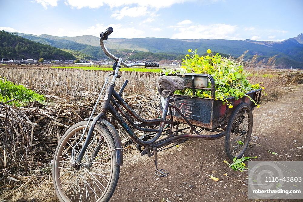 Three Wheeled Bicycle With Vegetables, Lijiang, Yunnan Province, China