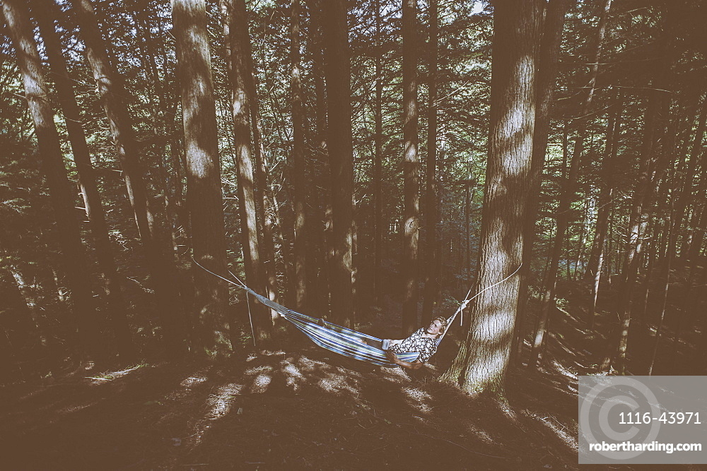 Young Man Laying In A Hammock In A Forest, Little River State Park, Waterbury, Vermont, United States Of America