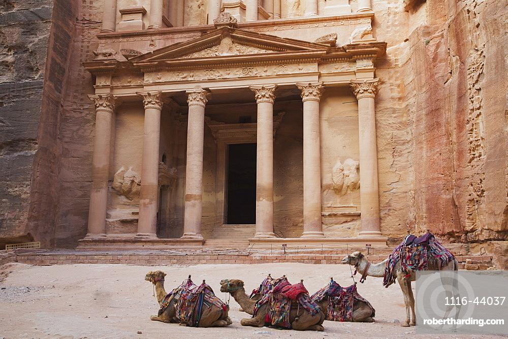 Camels In Front Of The Treasury, Petra, Jordan