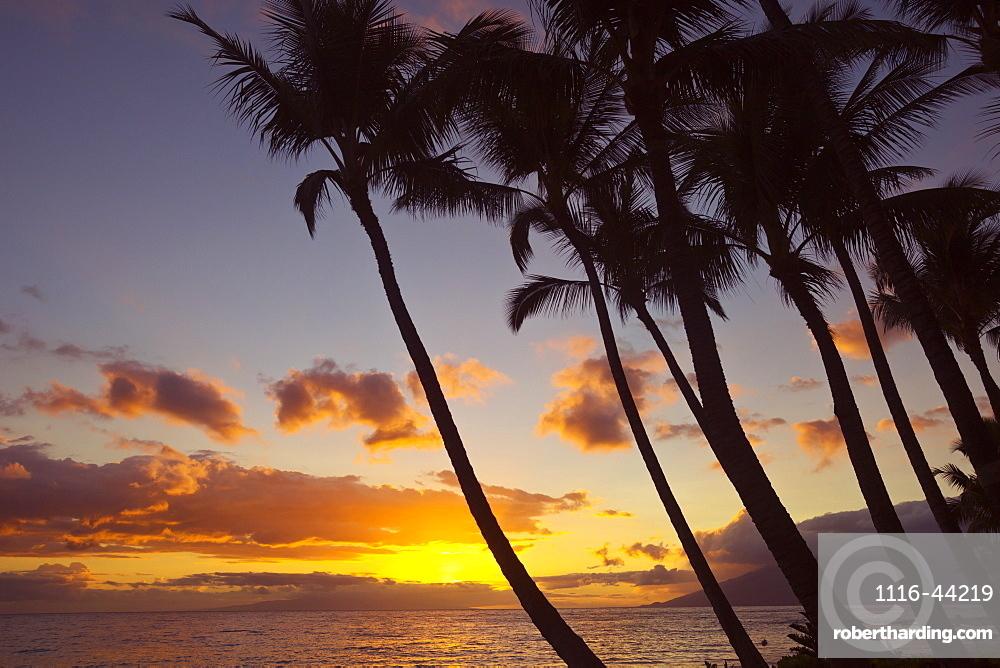 Sunset And Silhouette Of Palm Trees, Keawekapu, Wailea, Maui, Hawaii, United States Of America
