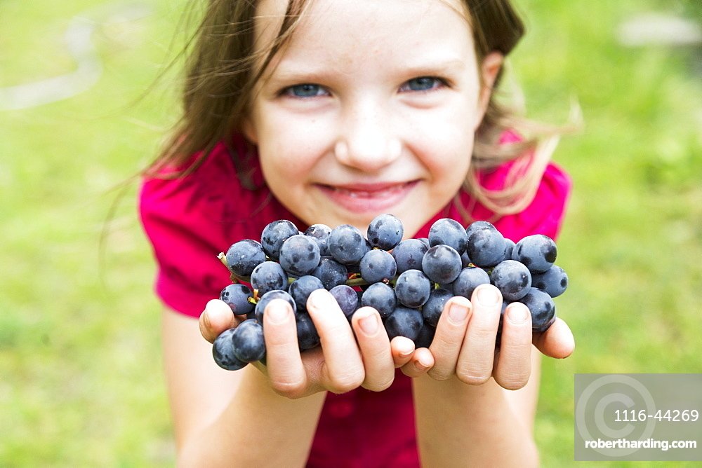 A Girl With Handfuls Of Grapes, Salmon Arm, British Columbia, Canada