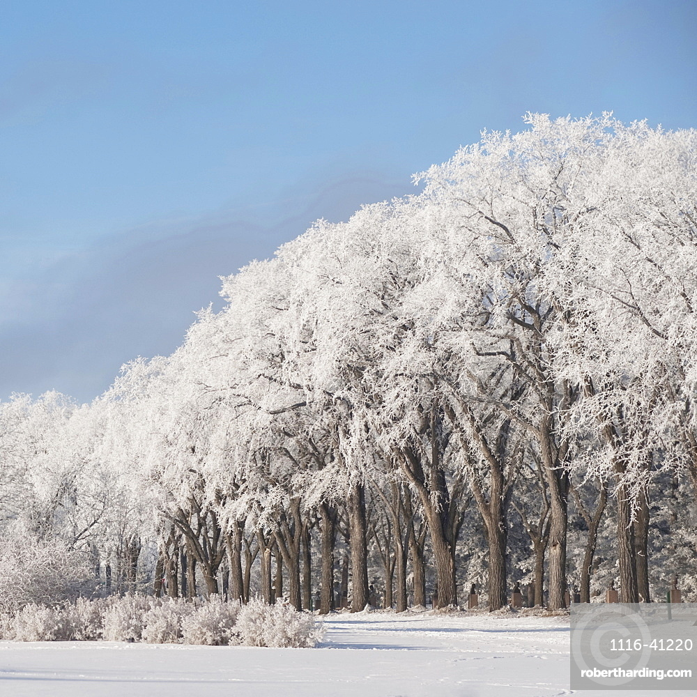 Winnipeg, Manitoba, Canada, Trees Covered In Snow In The Winter
