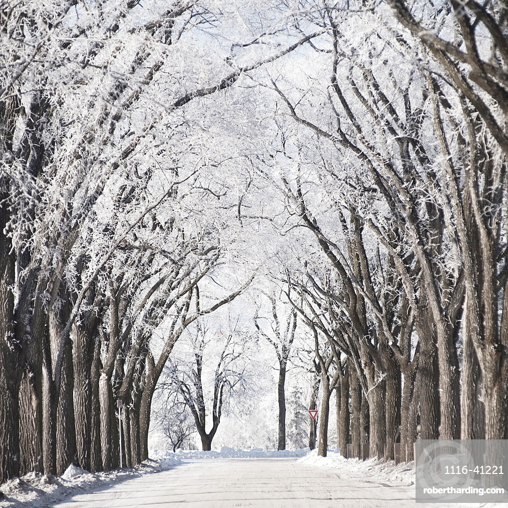 Winnipeg, Manitoba, Canada, A Road And Trees Covered In Snow In Winter
