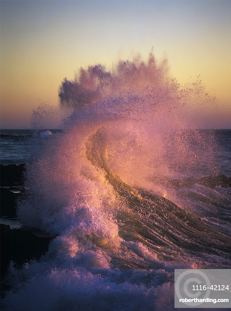 A Wave Glowing Pink Breaks On The Shore At Sunset, Yachats, Oregon, United States Of America
