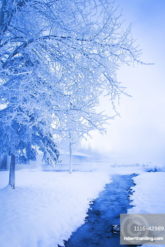 Frosted Trees By The Hot Springs, Chena Hot Springs Resort, Fairbanks, Alaska, United States Of America