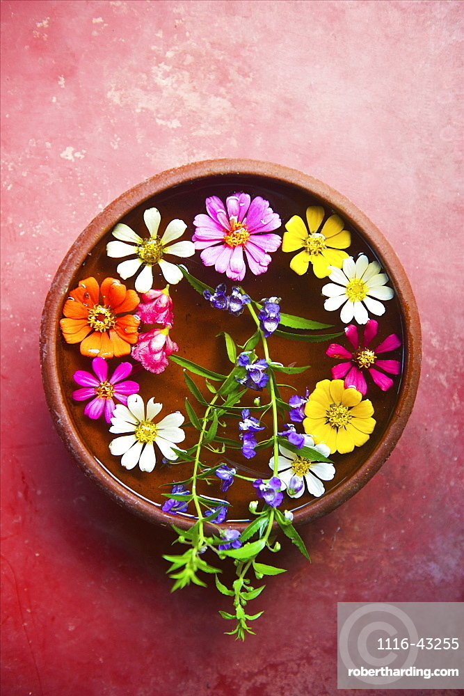 Colourful Flowers Placed In A Shallow Bowl Of Water For Decoration, Ulpotha, Embogama, Sri Lanka