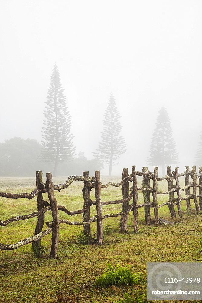 A Remote Foggy Pasture At Koele, Lanai, Hawaii, United States Of America