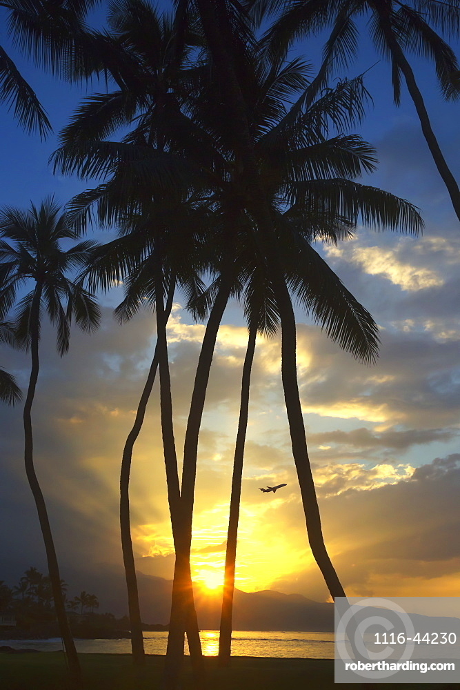 Airplane Taking Off At Sunset With The Setting Sun Shining Through The Palm Trees On The North Shore Of Maui, Spreckelsville, Maui, Hawaii, United States Of America