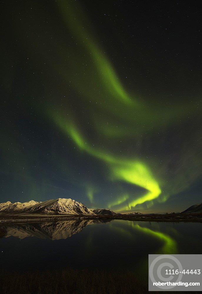 Northern Lights (Aurora Borealis) Over The Dempster Highway And Reflected Into A Pond, Yukon, Canada