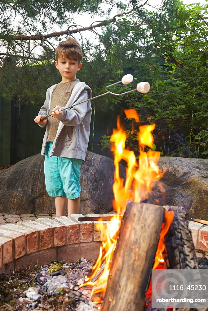 Young Boy Toasting Marshmallows On An Open Fire In A Backyard, St. Albert, Alberta, Canada