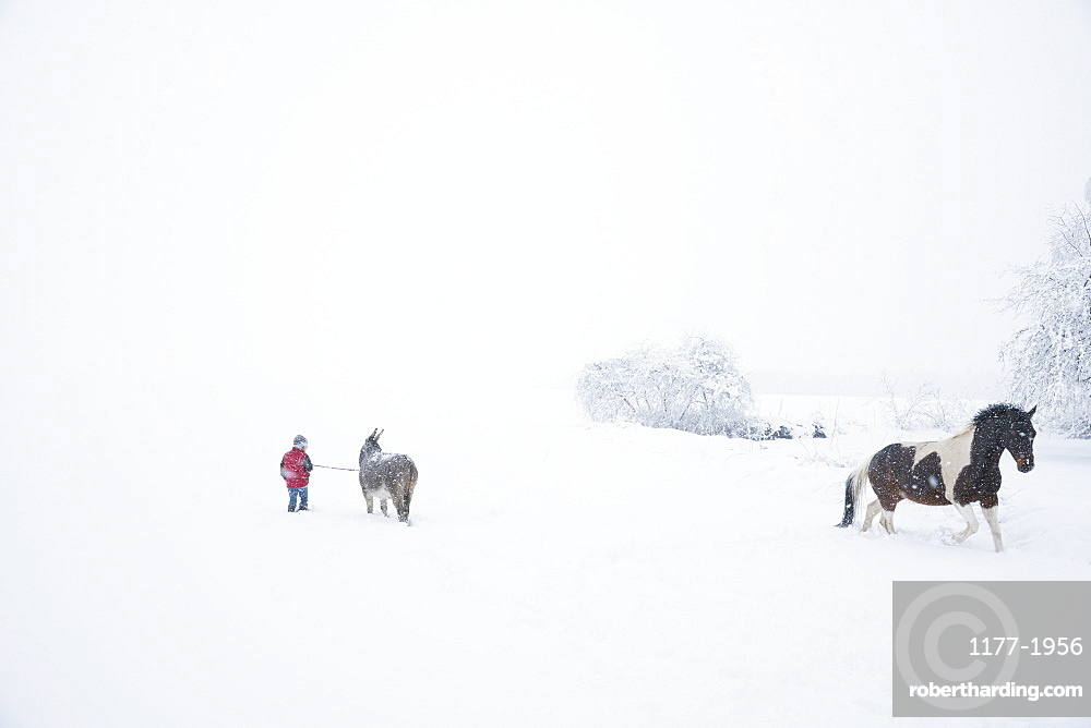 Girl in snowy field with donkey and horse