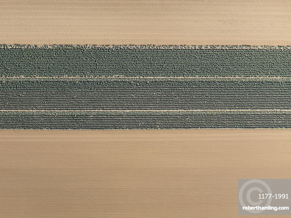 Aerial view brown and green agricultural crops, Hohenheim, Baden-Wuerttemberg, Germany